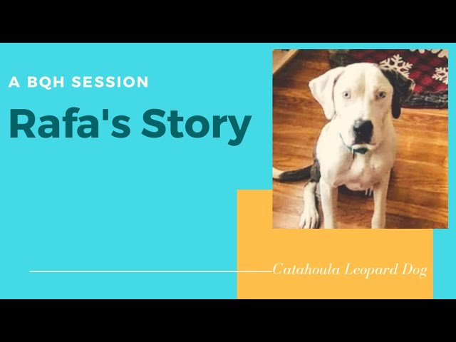 BQH Pet Sessions-Revisiting Rafa, the Dog with a Broken Heart