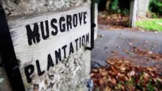 Musgrove Plantation Yoga Retreat: Connect