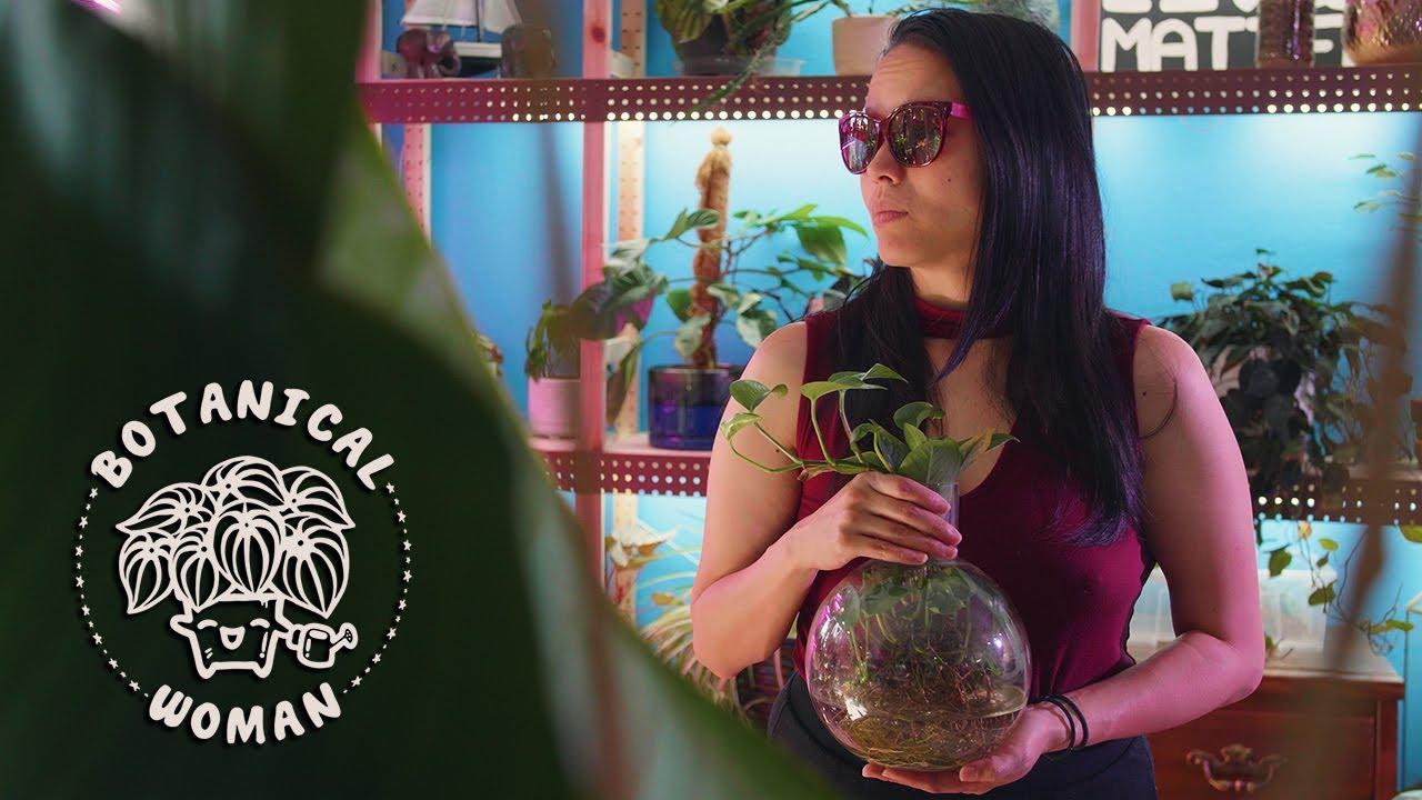 I'm Sorry Baby Dragon   Alocasia 'Silver Dragon' [Plant Music Video]