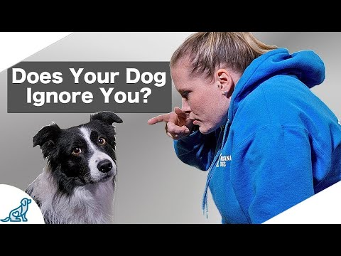 Leadership Dog Training - Are You Being A Bad Leader? - Professional Dog Training Tips
