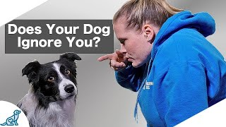 Are You Accidentally Being A BAD Leader For Your Dog?