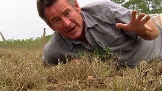 Jaguar Adventure With Nigel Marven - The Thorny Forest | Wildlife Documentary | Natural History