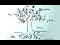 Aprender a dibujar - Biologia 4/6 - Cómo dibujar una planta y sus partes