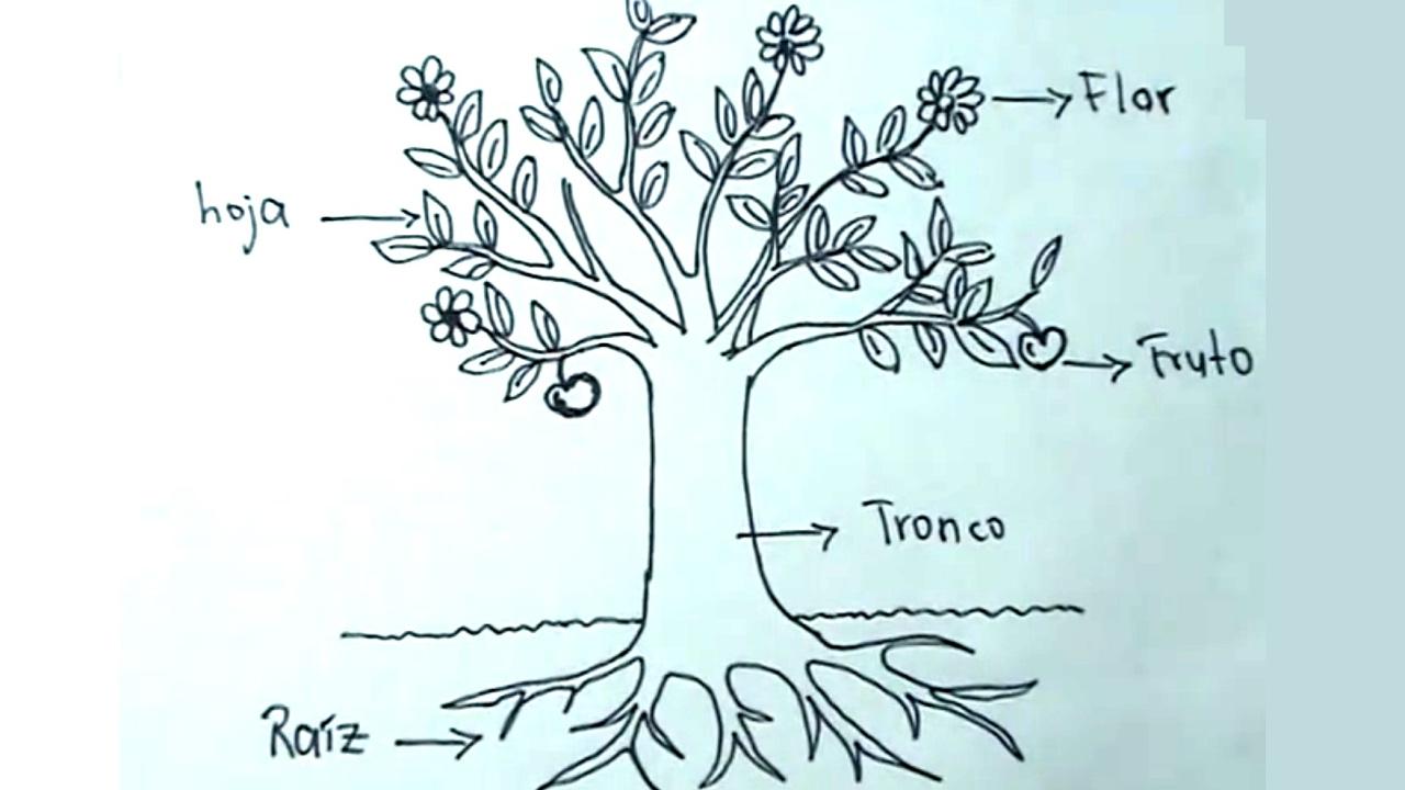 ciencias naturales 2 5 c mo dibujar una planta rbol y