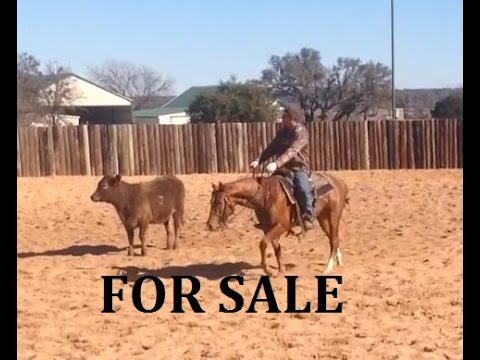 Cutting Horses For Sale Countin The Reys 2014 Sorrel Colt by Dual Smart Rey