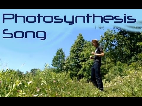 photosynthesis rap lyrics Rapper and scientist jon chase makes photosynthesis easier to remember with this rap.