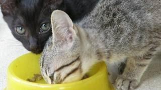 【野良猫親子】野良猫親子の朝の風景。今日もみんな元気です cat family thumbnail