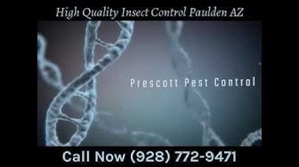 High Quality Insect Control Paulden AZ