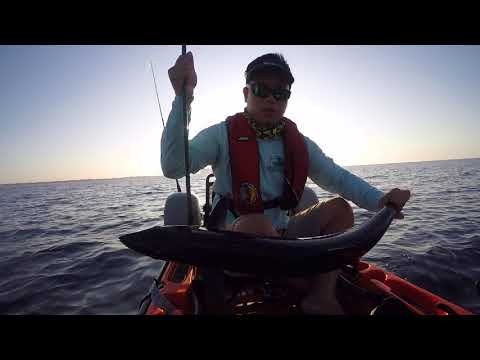 i-caught-3-king-mackerel-on-my-penn-battle-3000!