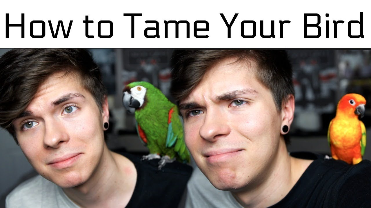 how-to-tame-your-bird-make-them-like-you-more-feat-sun-conure-severe-macaw
