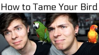 How to Tame Your Bird/Make them like you more! (feat. Sun Conure & Severe Macaw)