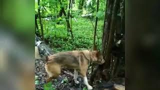 Обычный выходной день волонтера приюта для собак