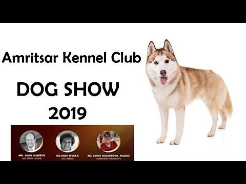 Husky Dog Show Amritsar Kennel Club - 2019