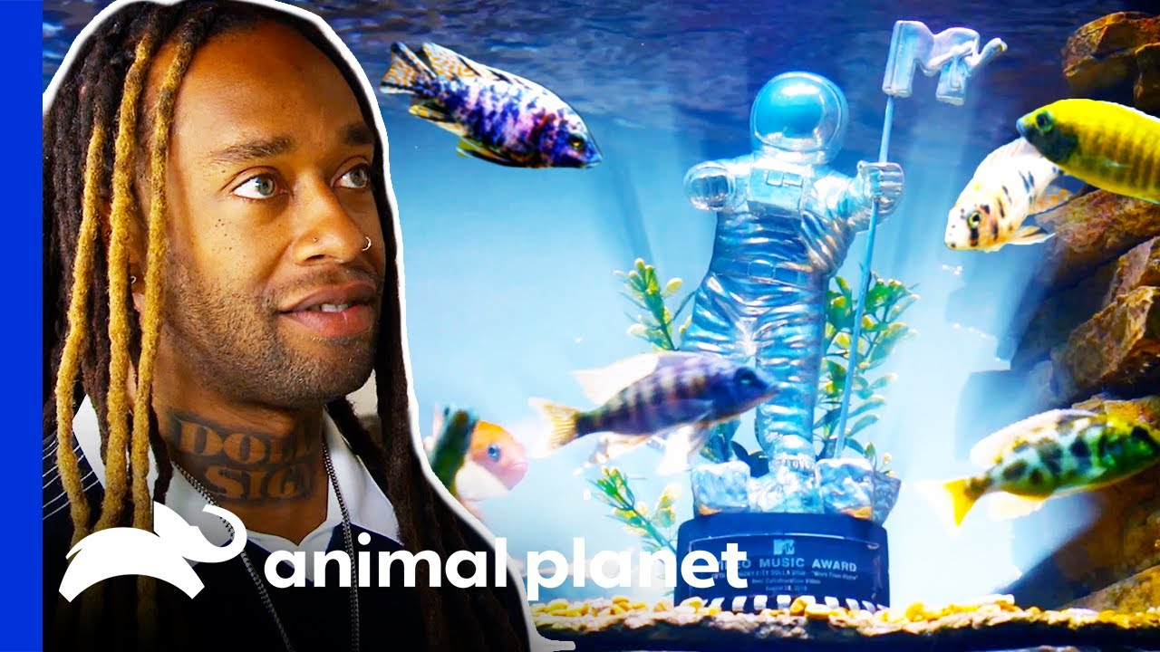Download Ty Dolla Sign's Music Awards Decorate His Stunning New Fish Tank   Tanked