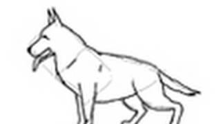 Como dibujar un perro raza Pastor Alemán - Dibujos de perros