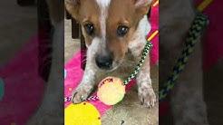 Video of adoptable pet named Lucky BUCKY