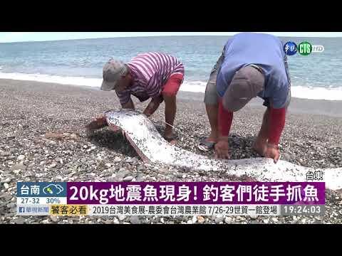 台東驚見20kg地震魚 眾人徒手抓魚   華視新聞 20190722