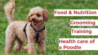 Poodle 101  Feeding, Grooming, Exercise, Training and Health care of Poodles
