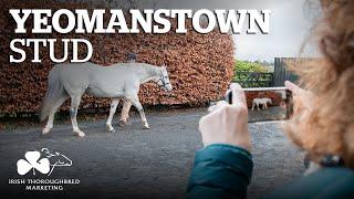 ITM Irish Stallion Showcase 2021 - Yeomanstown Stud