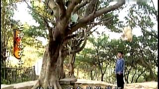 戲說臺灣-芒神治歹子 01 集【 ☆ 亮 亮 の 家 族 ★ 】