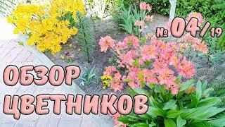 Обзор цветников №4/19. Шикарное цветение азалий и рододендронов