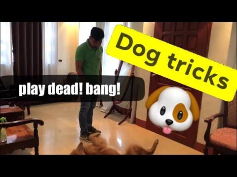 Dog tricks, paano nga ba ituro sa aso, #episode1 sit