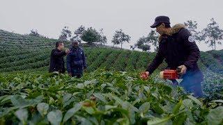 Tea Industry's Evolution | CCTV English