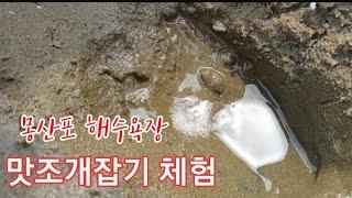 #몽산포해수욕장 맛조개잡기