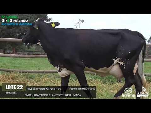 LOTE 22 - REM FADHIGA - REM0260 - 5º LEILÃO GIR E GIROLANDO GENÉTICA ADITIVA
