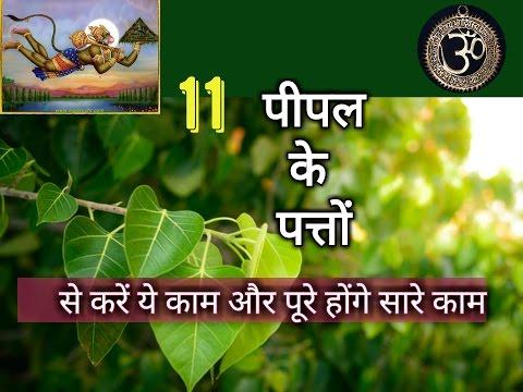 पीपल के 11 पत्तों का चमत्कार खुद देखें | Only 11 Peepal leaves to Solve All your. Financial Problems thumbnail