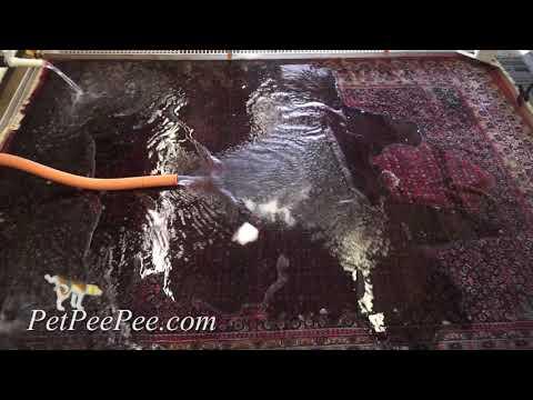Wool rug smells like wet dog-#petpeepee