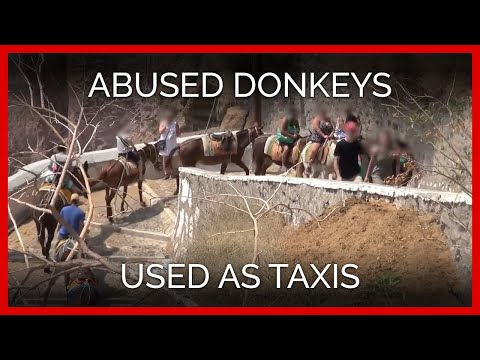 Donkeys on Santorini Abused and Used as Taxis