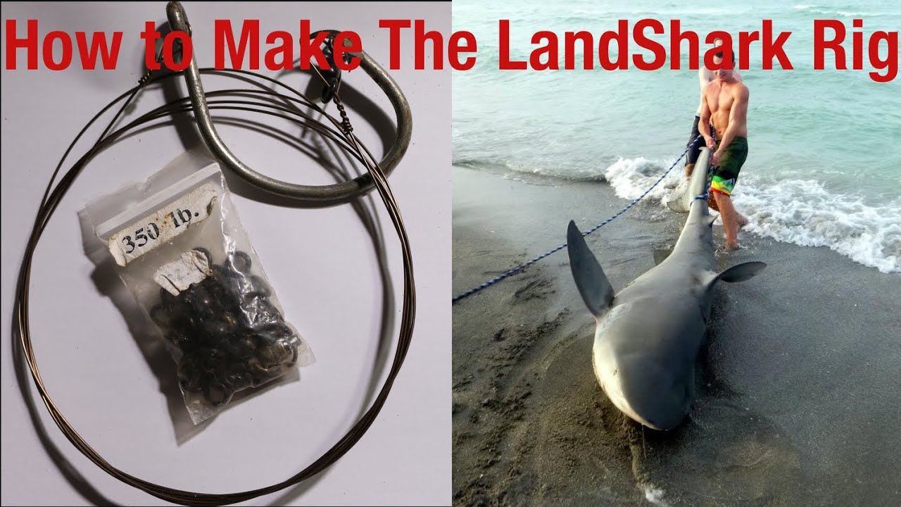 medium resolution of how to shark fishing rig landbased and boat