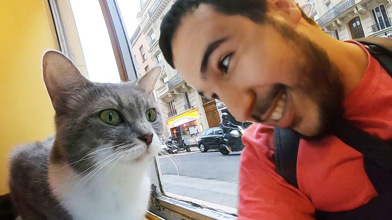 J ai adopté un chat