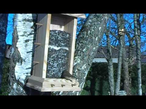 mangeoire silo et oiseaux du jardin youtube. Black Bedroom Furniture Sets. Home Design Ideas