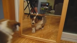 Cats and dogs vs mirror for the first time - Funny animal compilation
