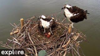 Chesapeake Conservancy Osprey Cam powered by EXPLORE.org thumbnail