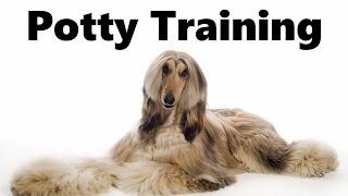 How To Potty Train An Afghan Hound Puppy - Afghan Hound House Training Tips - Afghan Hound Puppies