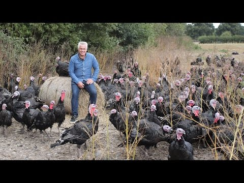 Organic Kelly Bronze Turkeys | Abel & Cole