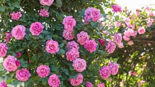 DTM作品です。 Tchaikovsky, Valse des Fleurs (CASSE-NOISETTE Op.71a)...