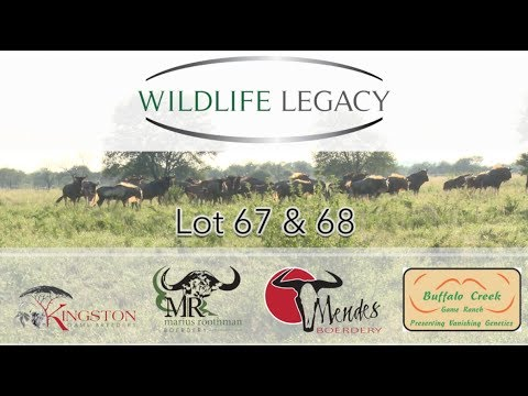 Wildlife Legacy 2017 Annual Auction  |  King Wildebeest Cows  |  Lot 67 & 68