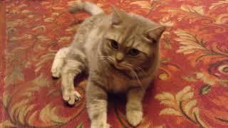 Взорвал интернет! Кот разговаривает, говорит пошёл на мама МАаа МАааа :(( Вы помните это?