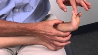 Muscles Tendons Medial Foot
