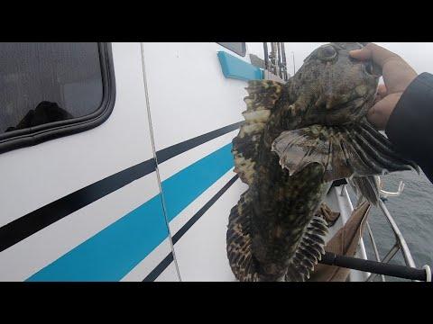 Sea Wolf Rockfish Charter | Lingcod And Cabezon
