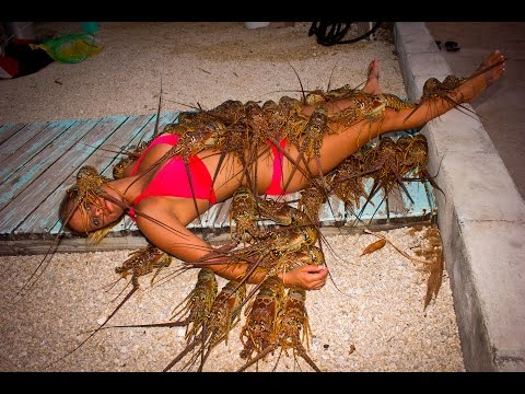 SPINY LOBSTER: CATCHING, CLEANING, COOKING, EATING!! tasty tuesday 27