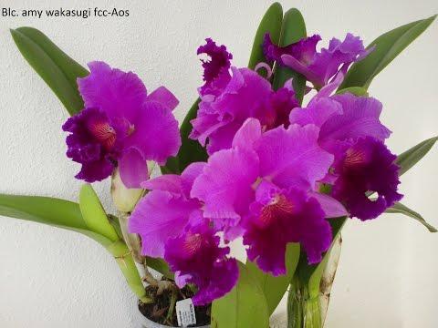 Beautiful Orchids 2