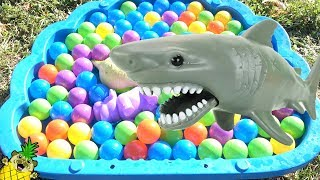 Learn Animals In Ball Pit w/ Real Animals by Puggy Pineapple