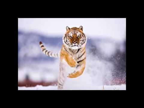 Природа: в мире животных: фото животных, смешные животные