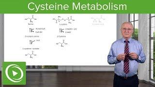 Cysteine Metabolism – Amino Acid Metabolism  | Lecturio