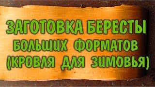 БЕРЕСТА ЗАГОТОВКА БЕРЕСТЫ bark billet крупноформатные листы - кровельный материал для жилья в лесу.(Природа нам дает прекрасный, абсолютно водостойкий и никогда не гниющий материал - бересту. Из бересты можн..., 2016-07-09T01:20:23.000Z)